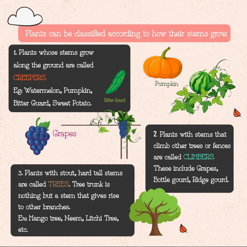 Plants STEM Book for kids