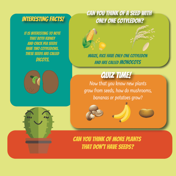 plant life cycle activities for kids