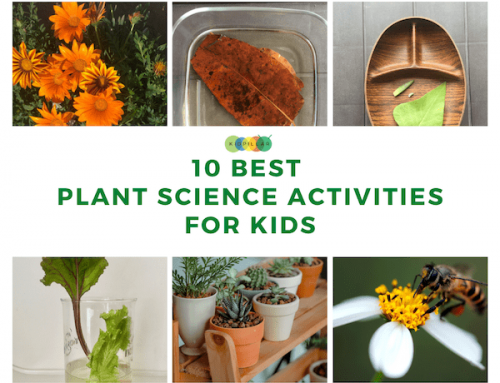10 Best Plant Science Activities for Kids