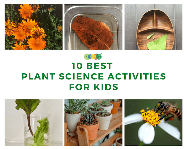 plant science experiments for kids