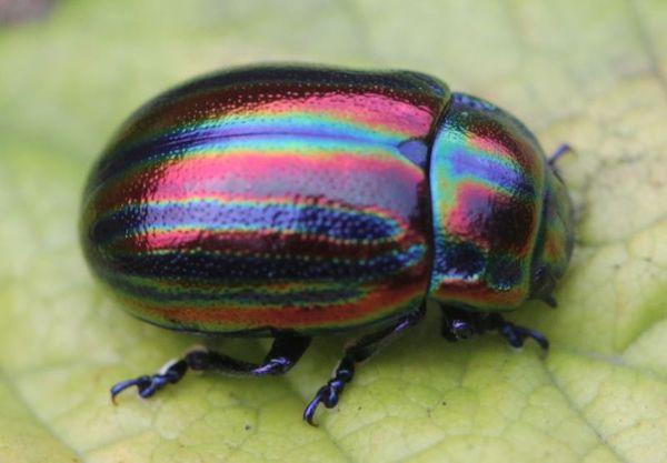 Rainbow Animals for kids
