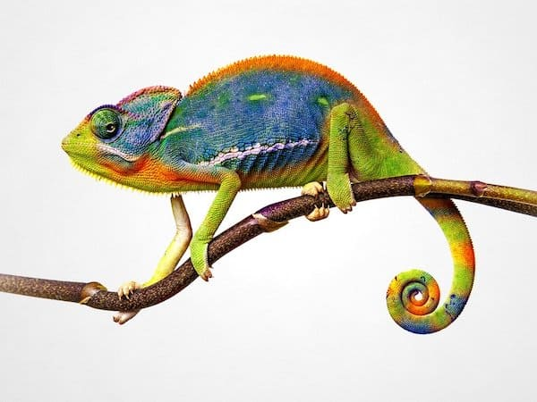 Colour changing animals