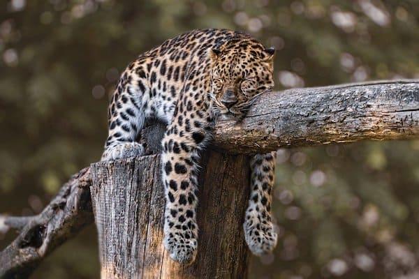 mammal sleeping facts
