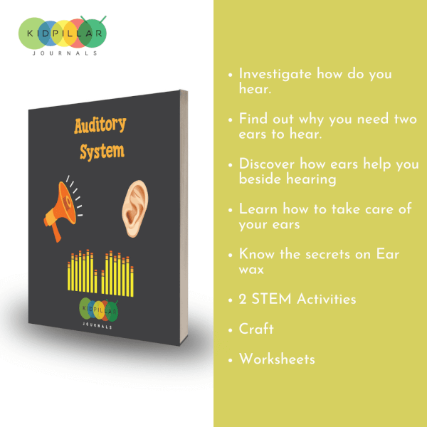 auditory system for kids