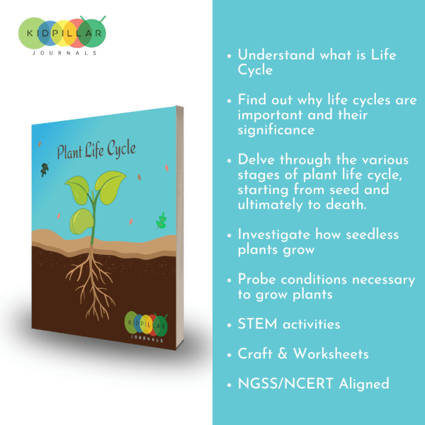 Plant life cycle for kids
